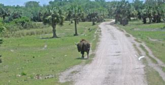 Billie swamp safari coupons